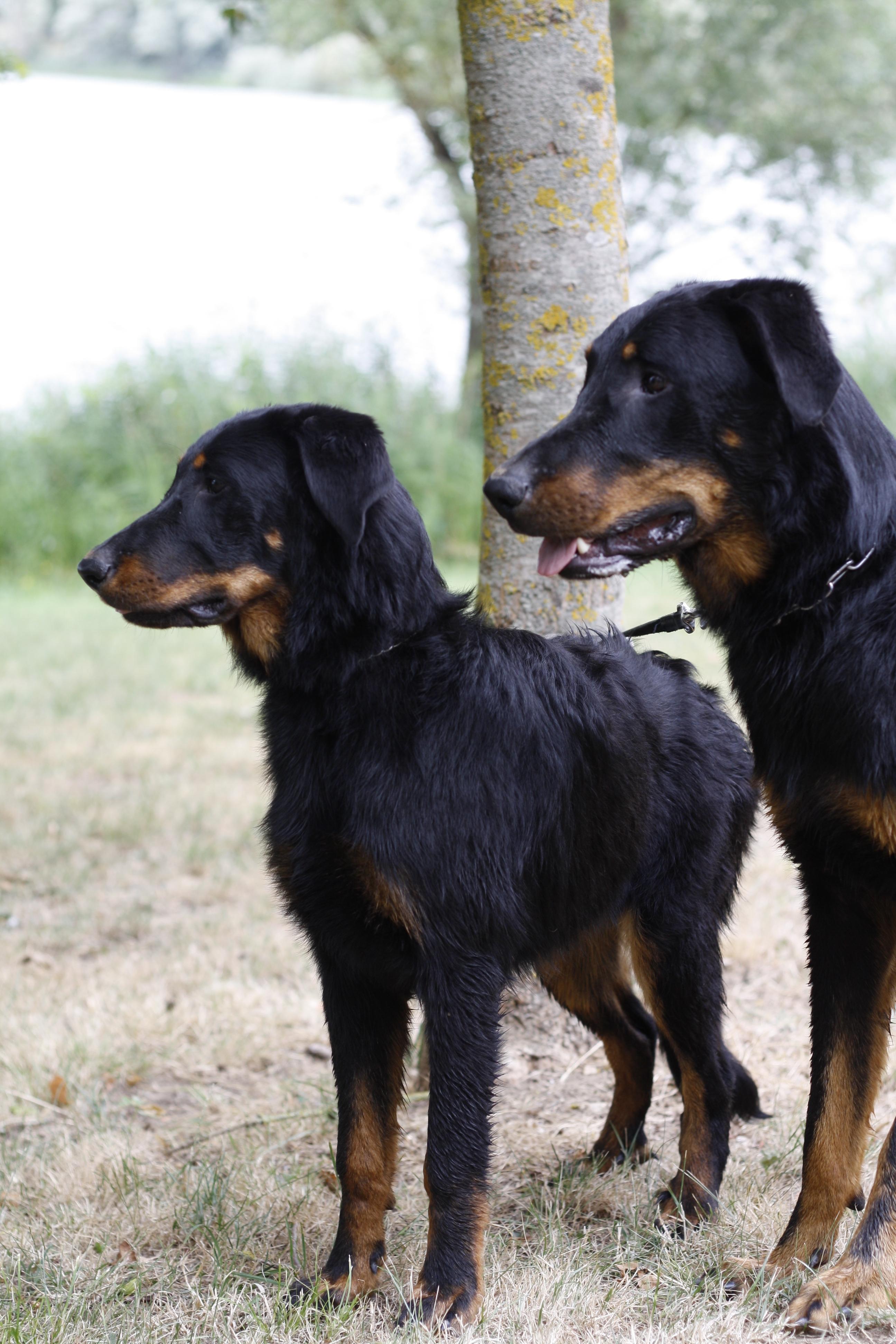 Le couple de Beaucerons de Cendrine