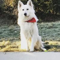 Louka 2 ans et demi, le chien de Damien