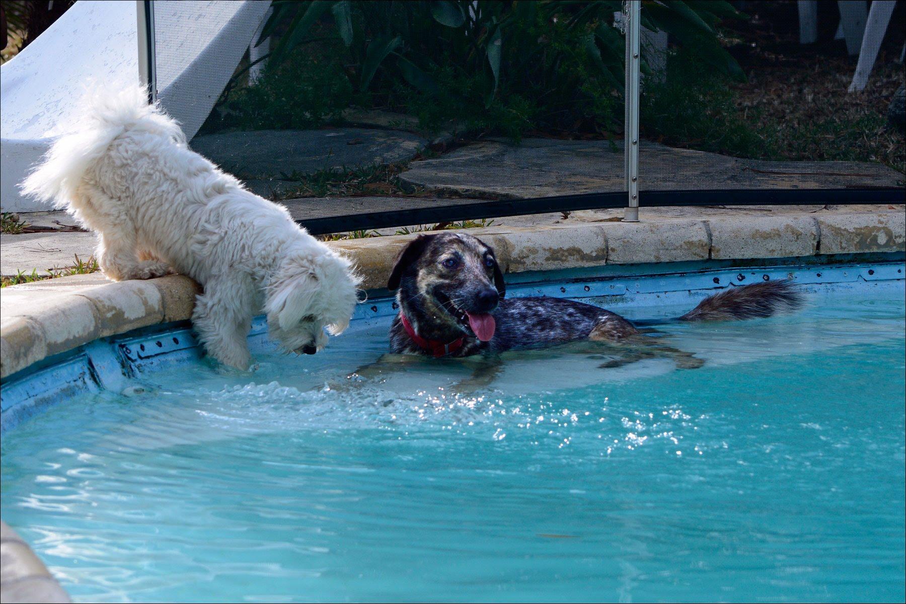 Lovely et Nina à la piscine