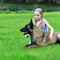 Malinois dans l'herbe avec une petite fille
