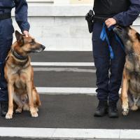 2 Malinois chien policier