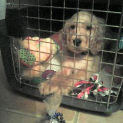 Marcel dans sa cage