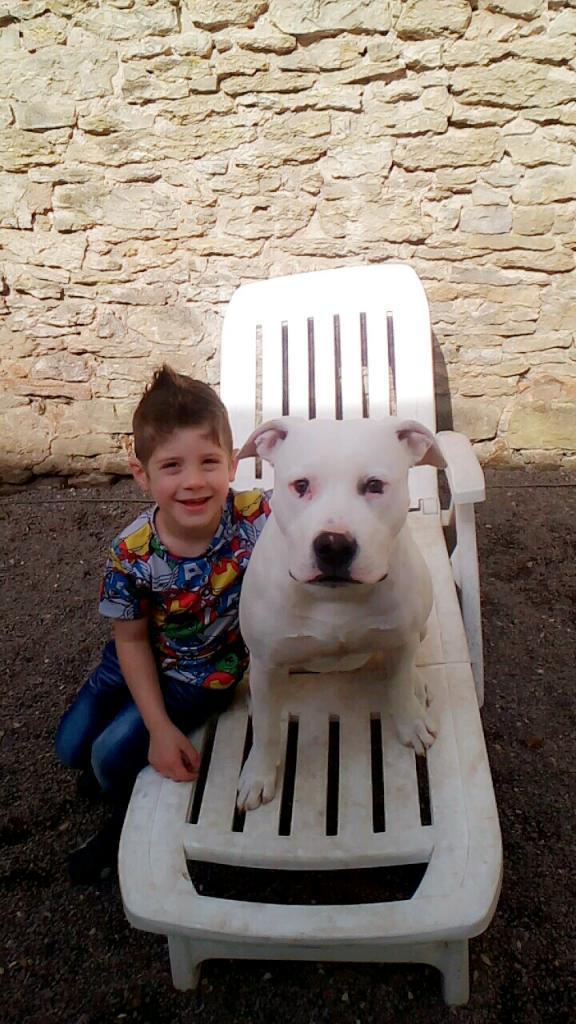 Marvel, Dogue Argentin de 8 mois