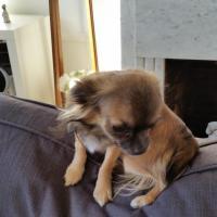 Max 1 an, crevette de 2,5kg