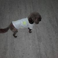 Melrose avec son petit pull