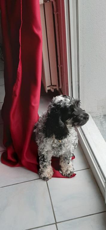Mulan 4 ans, le Cocker de Sylvie