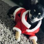 Nuts avec son joli costume de père Noël