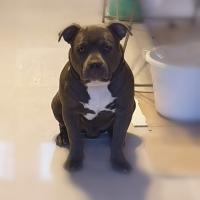 Oaxès, Bully de 6 mois