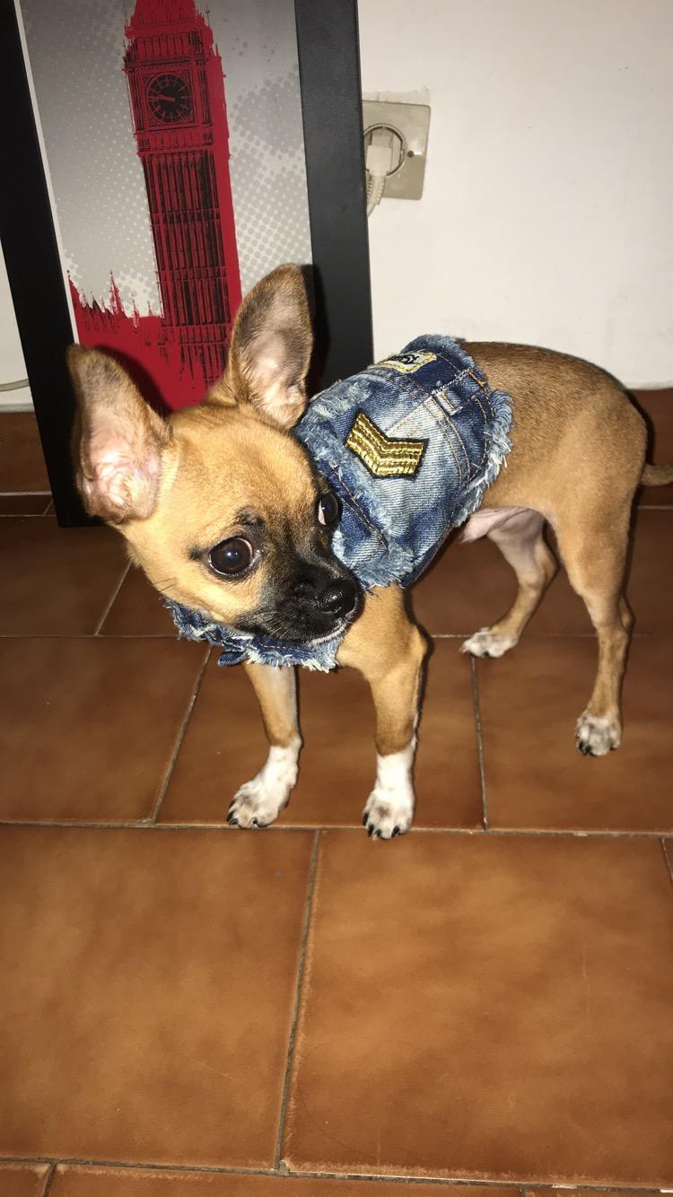 Olfi avec sa jolie veste en jean