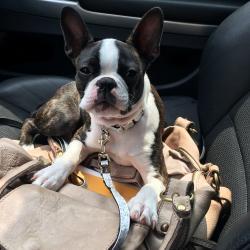Olly en voiture