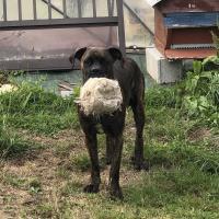 Payback avec son ballon