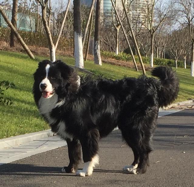 Pocky le chien de Samy