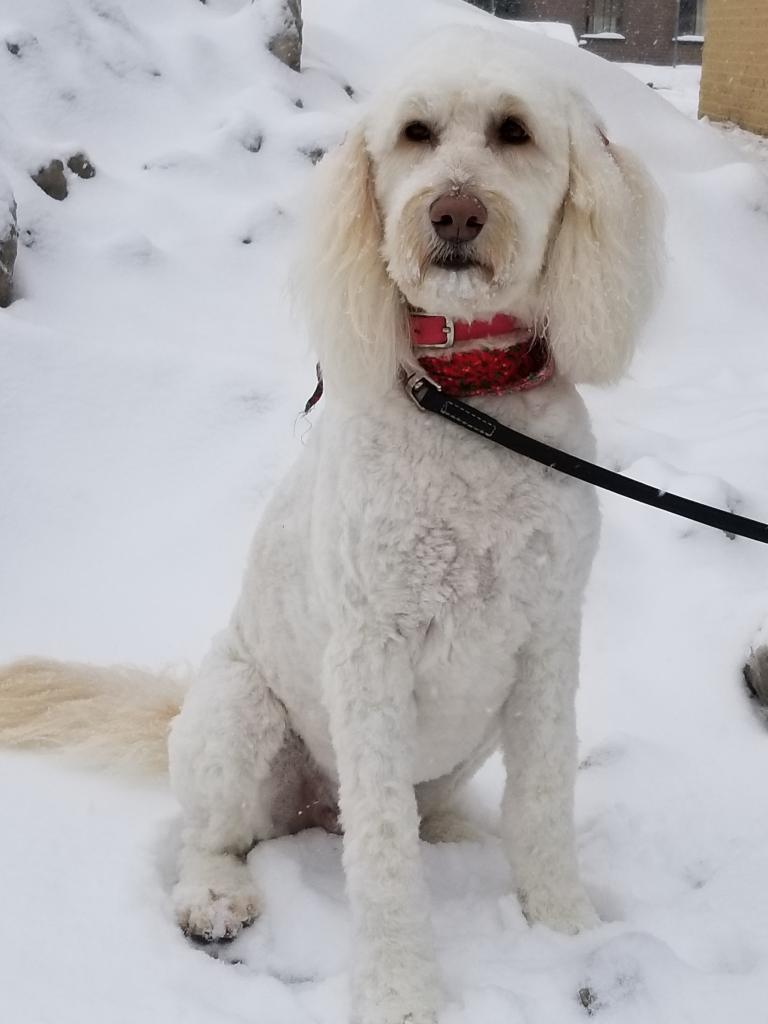 Princesse, la jolie chienne de Valérie