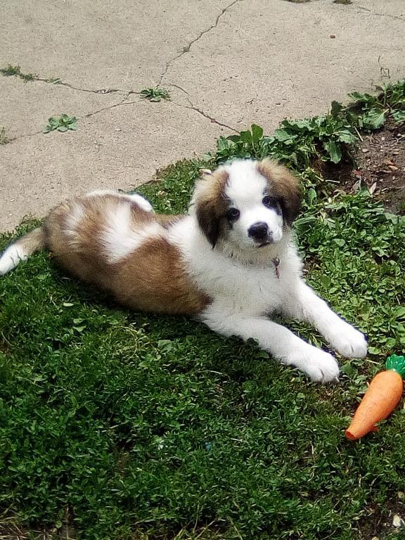 Priya avec son jouet carotte