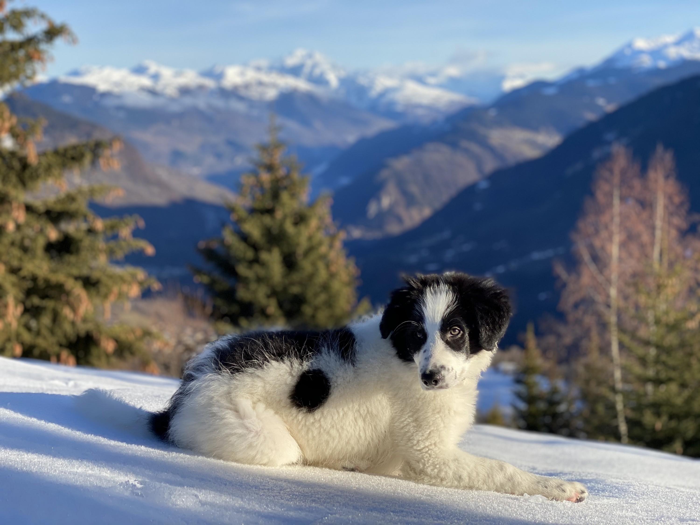 Rimbaud à la montagne