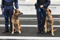 2 chiens policier avec leur maitre