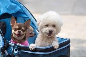3 chiens dans une poussette