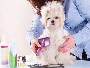 Accessoire toilettage chien