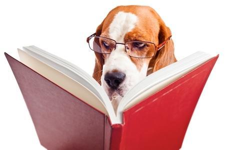 Beagle livre adobestock 58976368