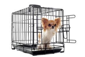 Caisse pour chien