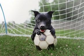 Chien avec son ballon de foot