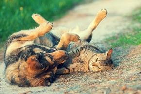 Chien et chat qui se chamaillent
