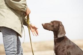 Choisir dresseur chien