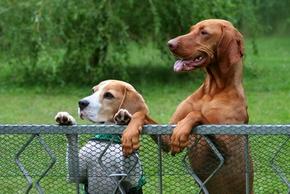 Cloture chien