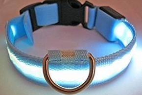 Collier bleu lumineux pour chien