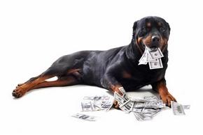 Combien coutent vaccins chiens