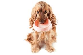 Comment bien nourrir chien