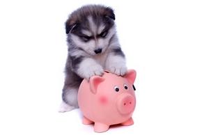 Comparer assurances chiens