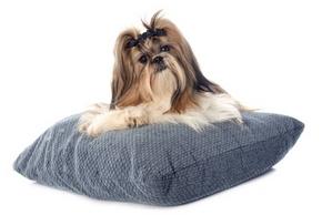 Coussins chien