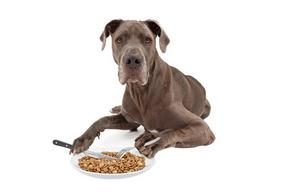 Croquette chien age
