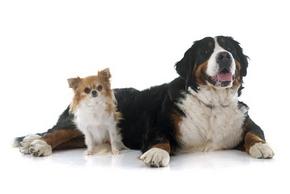Croquette selon race et taille du chien