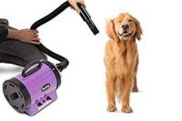 Golden retriever qui se fait secher au sechoir pulseur pour chien