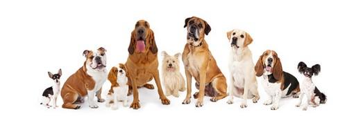 Groupe de chiens 1