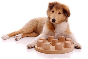 Jouets chiot
