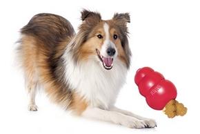 Jouets kong chien