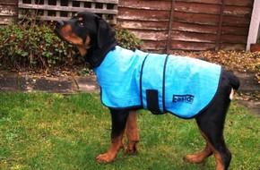 Le manteau rafraichissant pour chien