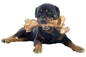 Os pour chien