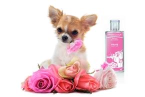 Parfum chien