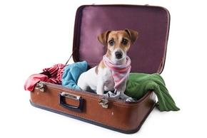 Partir vacances chien