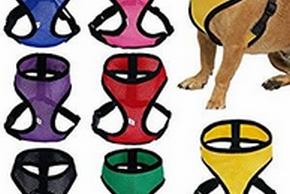 Plusieurs harnais pour chien