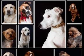Plusieurs races de chien