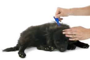 Produits pour soigner chien des tiques