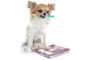 Quand faire vaccination chien
