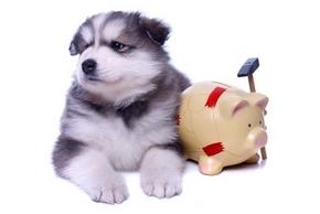 Remboursement mutuelle chien
