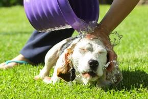 Solution pour proteger son chien du coup de chaleur